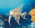 Cá nhiệt đới